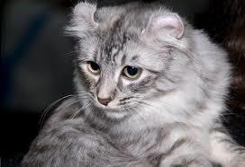 Senior Pet Care, Ela Home Care